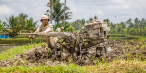 Farmer with Small Tractor plowing the Rice Fields Bali Indonesia