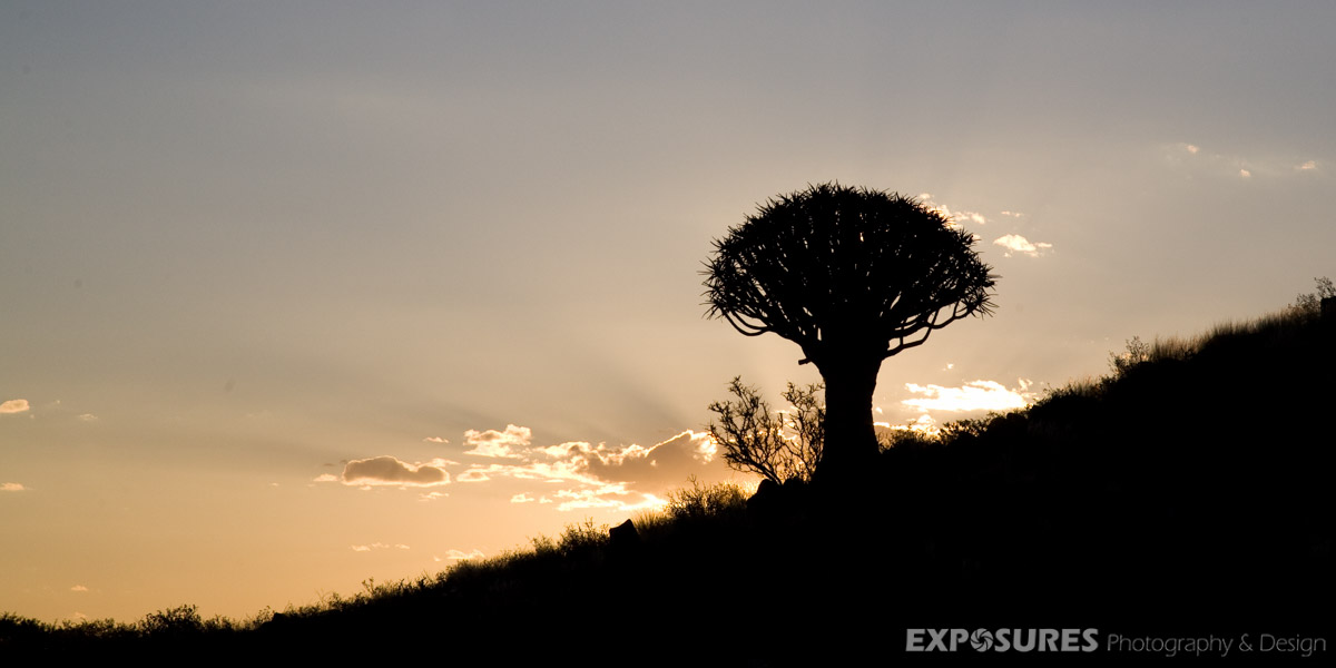 Quivertree forest, Keetmanshoop, Namibia