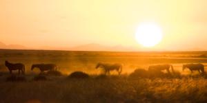 Wild Horses Klein Aus Vista, Namibia