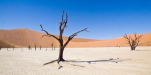 Acacia Tree Dead Vlei, Sossusvlei - Namibie