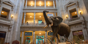 Smithsonian - Natural History Museum