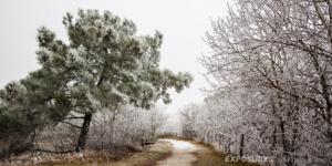 """Winter """"Schoorlse duinen"""""""