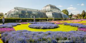 Palm House, Kew Gardens - London
